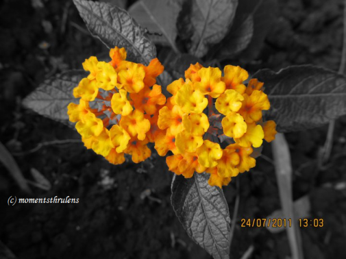 one pic with flower in Color and Leaves w/o colors