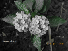 while second with Leaves in Color and Flower w/o color......