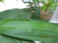 Have you seen A Droplet being Transparent that you can see through it, I dint before but while clicking this pic I did. See how the center line of Leaf is Visible through the Droplet (not very Clearly but still it is)
