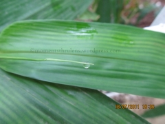 Another Nice click of almost transparent Droplet. Being so balanced on the thin Leaf.
