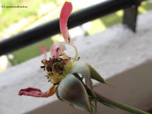 And A Withered Flower is A Symbol of our Ultimate Destination known as Death.