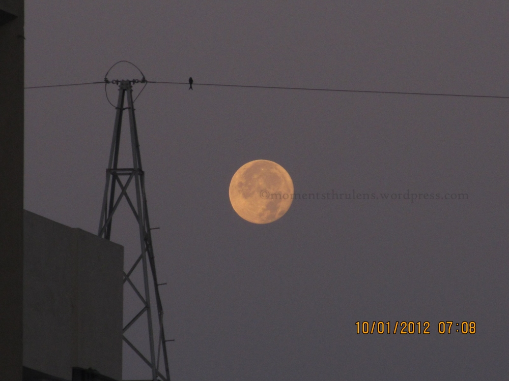 """Mesmerizing Moon in an Early Morning...that caught my attention due to its Fragile n Soft Look....and that one Bird on the Electric made me feel like """"It was waiting for someone on that wire whole night along with Moon in the Sky"""""""