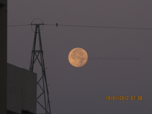 "Mesmerizing Moon in an Early Morning...that caught my attention due to its Fragile n Soft Look....and that one Bird on the Electric made me feel like ""It was waiting for someone on that wire whole night along with Moon in the Sky"""