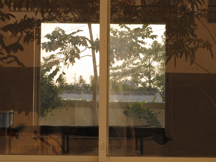 View of a Window through another window. Best part is the reflection of trees on first window while visible trees on the other side of second window.