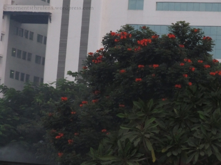 Trip starts with a these Orange flowers in Office Campus