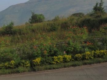 Roadside Orange Flowers