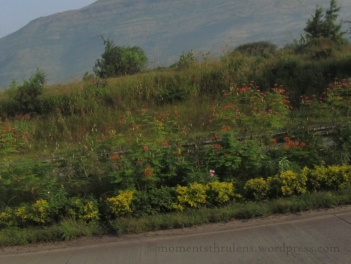 Roadside Orange Flowers