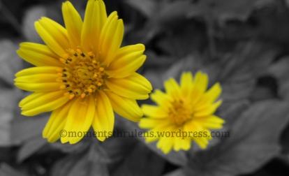 Twin Flowers