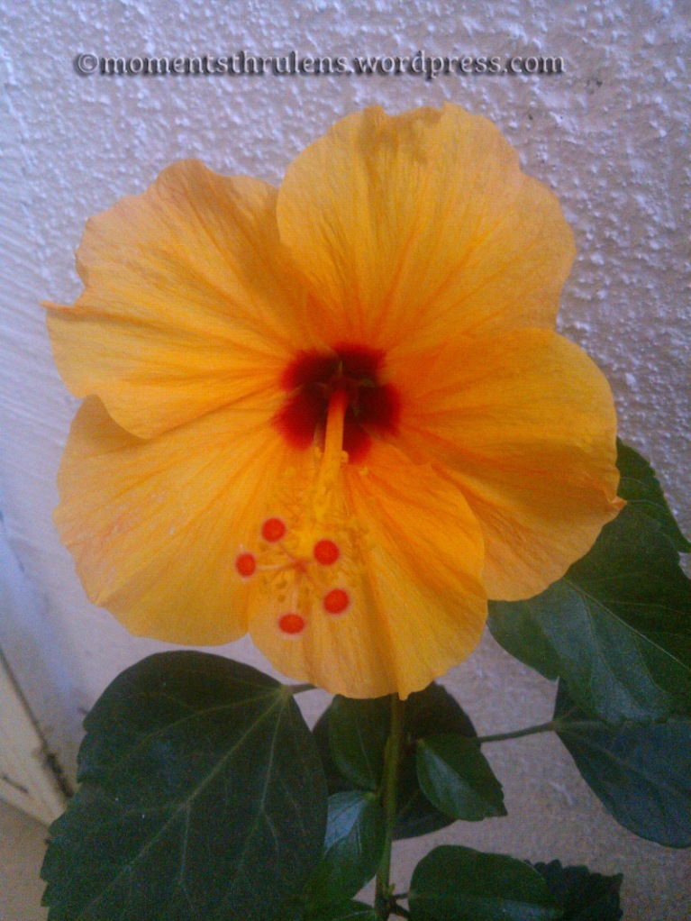 Beautiful Flower1