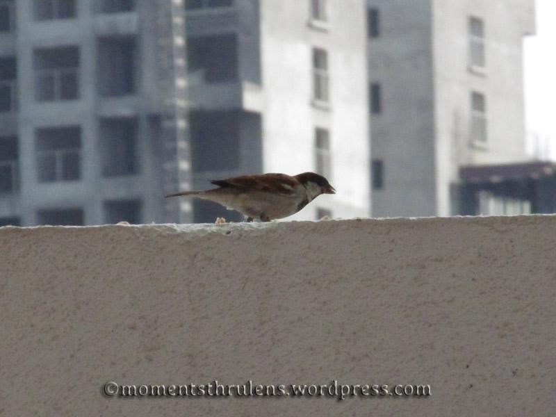A Tiny Bird all zoomed