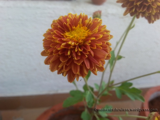 New Flower