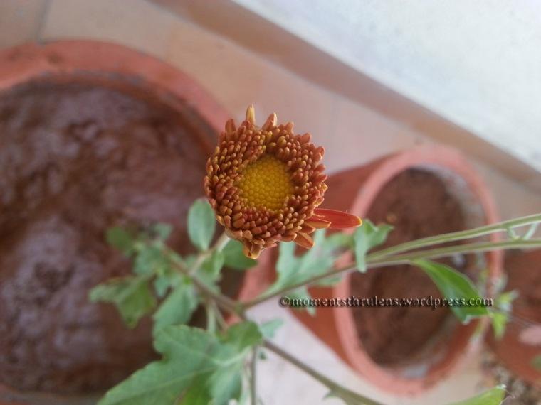 New Flower1