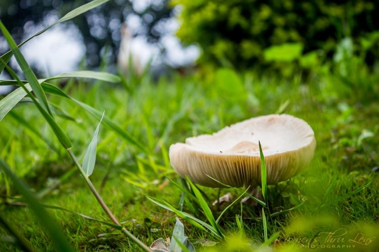 Mushroom @Panchgani Tent House