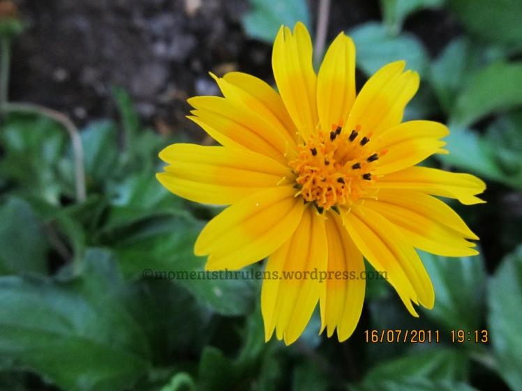 flower7 (1)