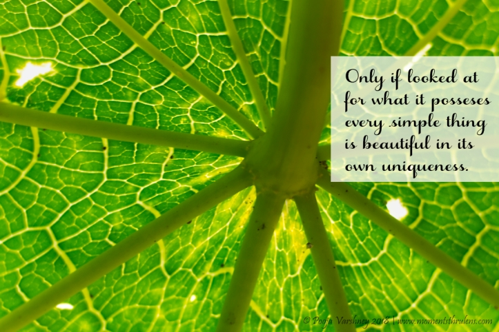 leaf closeup_quoted